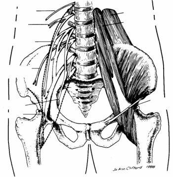 Levine Manuale Di Procedure Di Anestesia Clinica Del Massachusetts General Hospital 8a edizione.